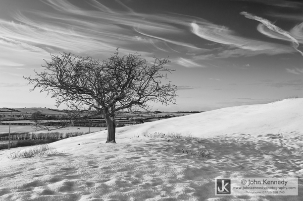 A snowy field, an isolated tree and a sky full of ice crystals