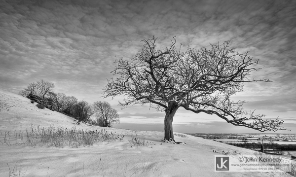 A lovely twisted tree bends to follow the surrounding snowy hillside
